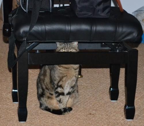 Luna le chat hypnotiseur.jpg