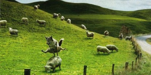 loup-saute-moutons.jpg