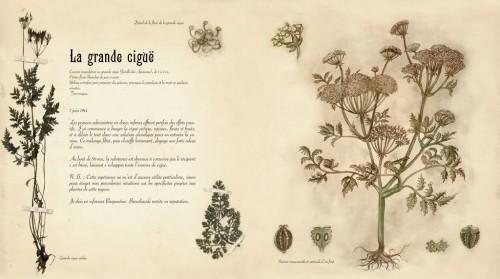 herbierdesfes3.jpg